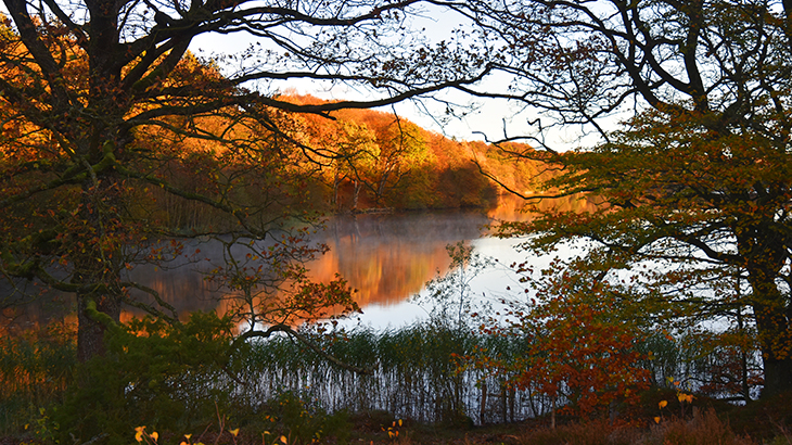Hald sø ved Dollerup bakker en efterårsdag