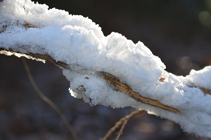 vinter-billede-hald-ege-skov-haaris-nisseskaeg-3