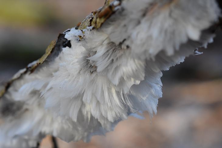 vinter-billede-hald-ege-skov-haaris-nisseskaeg