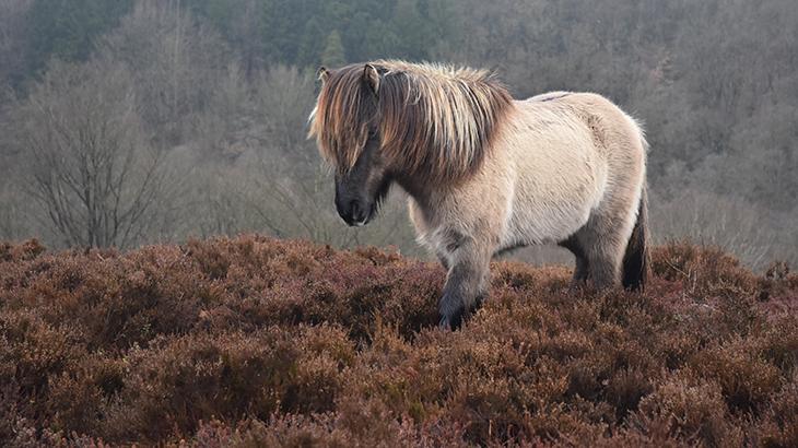 Dollerup bakker - hest