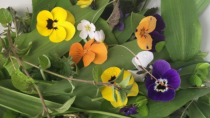 friske vilde urter og blomster