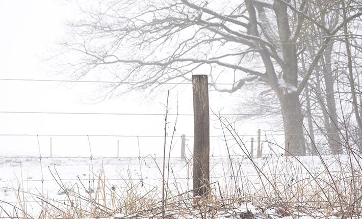 Dollerup bakker en vinterdag i 2019