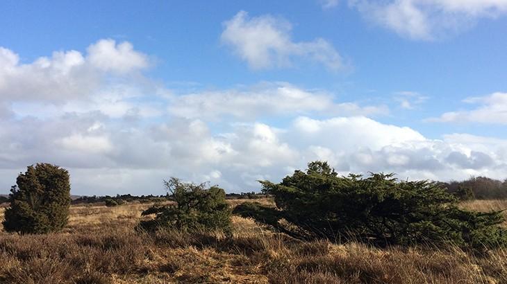 Dagens gåtur på Stanghede mellem Viborg og Karup - smuk dansk natur