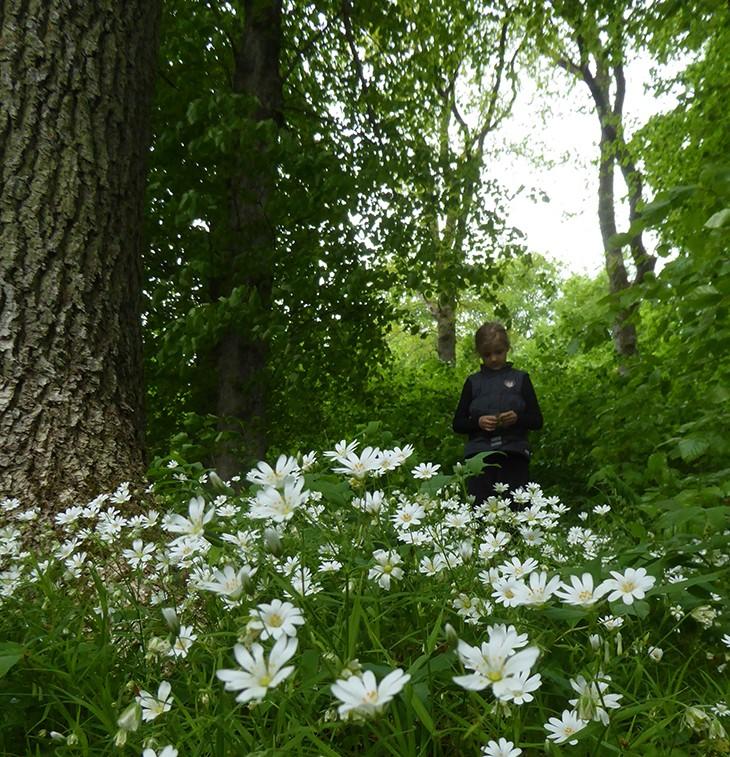 Forår i Dollerup, gårtur med min datter
