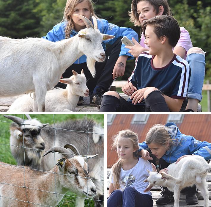 wow-park - hygge med geder