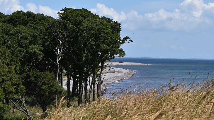Langeland - sydspidsen af øen - Gulstav