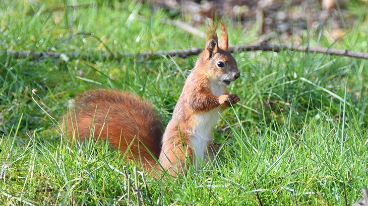 egern i min have