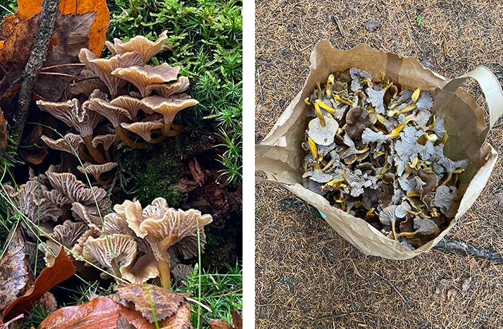 Efteråret er lig med svampejagt